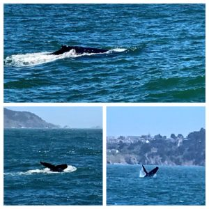 Whale Watching Cruise with Angel Island Ferry