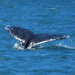 Angel Island Ferry Whale Watching Cruises on San Francisco Bay